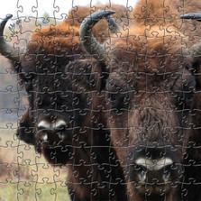 Bison Artisanal Wooden Jigsaw Puzzle | Zen Art & Design | ZADBISON