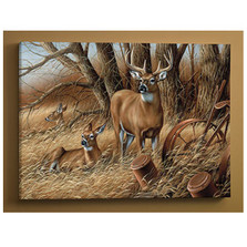 Whitetail Deer Canvas Wall Art | Wild Wings | F593682665