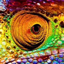 Chameleon Artisanal Wooden Jigsaw Puzzle | Zen Art & Design | ZADCHAMELEON