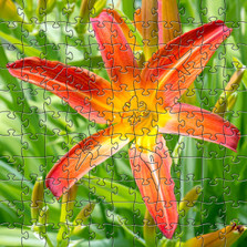 Orange Lily Artisanal Wooden Jigsaw Puzzle | Zen Art & Design | ZADORANGELILY