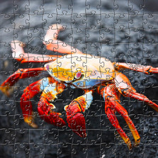 Red Rock Crab Artisanal Wooden Jigsaw Puzzle | Zen Art & Design | ZADRRCRAB