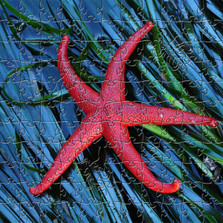 Starfish Artisanal Wooden Jigsaw Puzzle | Zen Art & Design | ZADSTARFISH