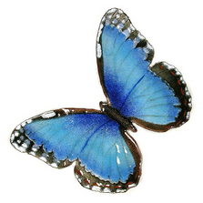 Bovano Blue Morpho Butterfly Wall Art | B1