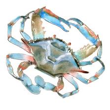 Bovano Blue Crab Enameled Copper Wall Art | W189B