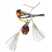 Bovano Blackburnian Warbler Bird Wall Art | W430