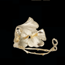 Ginkgo Leaves Gold Cuff Bracelet | Michael Michaud | 7181V | Nature Jewelry