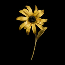 Black-Eyed Susan Flower Pin | Michael Michaud | 5993BZ | Nature Jewelry