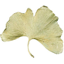 Gingko Large Pin | Michael Michaud Jewelry | SS5532bz