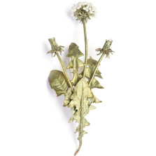 Dandelion Large Pin | Michael Michaud Jewelry | SS5670bzwp
