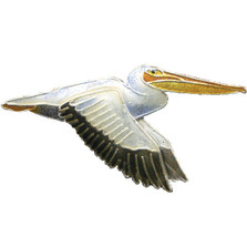 White Pelican Cloisonne Pin | Bamboo Jewelry | bj0064p