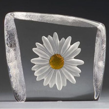 White and Yellow Daisy Crystal Sculpture | 33870 | Mats Jonasson Maleras