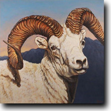 Dall's Sheep Print | Gary Johnson | GJcpmg
