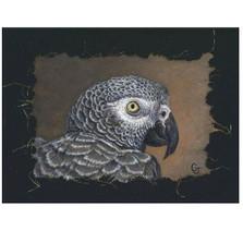 African Gray Portrait Print | Gary Johnson | GJgcafrgraypor