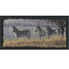 "Zebra Print ""Caught by African Light"" 