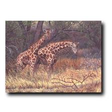 """Giraffe Print """"Giraffes of Samburu""""   Gary Johnson   GJgcgos"""