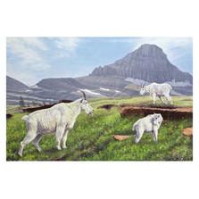 "Mountain Goat Print ""Summer in the High Country""   Gary Johnson   GJgcsithc"