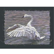 "Trumpeter Swan Print ""Taking Flight""   Gary Johnson   GJgctf"