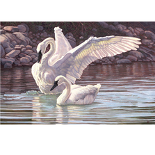 "Swan Print ""The Trumpeters' Duet"" 