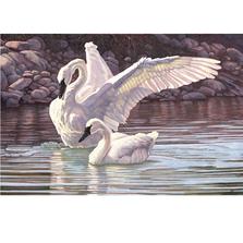"Swan Print ""The Trumpeters' Duet""   Gary Johnson   GJgcttd"