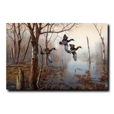 "Wood Duck Print ""Backwater"" 