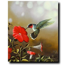 Ruby Throated Hummingbird Print | Jim Hansel | JHhummingbird