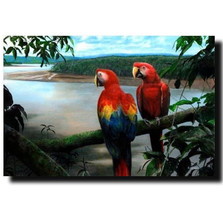 "Macaw Print ""Jewels of the Tropics"" 