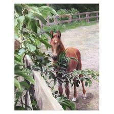 "Horse Print ""Kentucky Pride"" | Kevin Daniel | KD027"