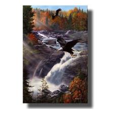 "Eagle Print ""Gooseberry Falls"" | Kevin Daniel | KD077"