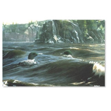 "Loon Print ""Mystic Point"" 