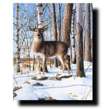 "Deer Print ""Simply Curious"" | Kevin Daniel | KD145"