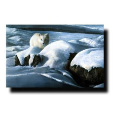 Arctic Fox Print | Kevin Daniel | KD149