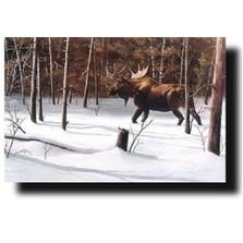 "Moose Print ""Winter Forage"" | Kevin Daniel | KD176"