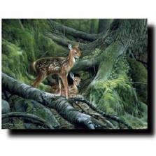 "Deer Print ""Awakening"" | Kevin Daniel | KD220"