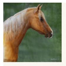 "Horse Print ""Palomino"" | Kevin Daniel | KD255"