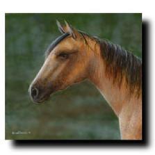 "Horse Print ""Buckskin"" | Kevin Daniel | KD257"