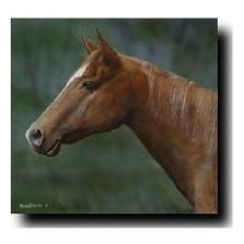 "Horse Print ""Chestnut"" | Kevin Daniel | KD258"