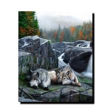 "Wolf Print ""Lazy Afternoon""   Kevin Daniel   KD341"