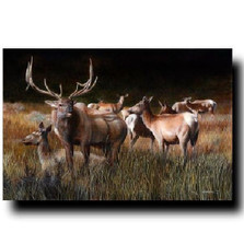 "Elk Print ""The Gathering"" 