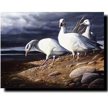 """Snow Geese"" Print | Kevin Daniel | KD373"