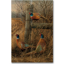 "Pheasant Wood Wall Art ""Abandoned Fenceline"" 