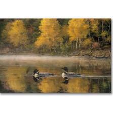 "Loon Wood Wall Art ""Autumn Morning Shoreline"" | Wood Graphixs | WGIAMS2416"