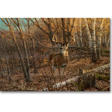 "Deer Wood Wall Art ""Great Eight""   Wood Graphixs   WGIGE2416"