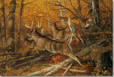 "Deer Wood Wall Art ""Maple Rush"" | Wood Graphixs | WGIMR2416"
