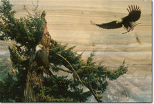 "Eagle Wood Wall Art ""New Generation"" 