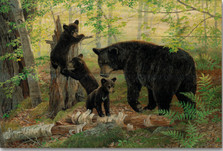 "Bear Wood Wall Art ""Play Time"" 