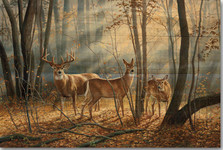 "Deer Wood Wall Art ""Woodland Splendor"" | Wood Graphixs | WGIWOOS2416"