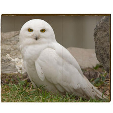 Snowy Owl Male Wood Wall Art | Mill Wood Art | KSNO3