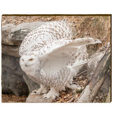 Snowy Owl Female Wood Wall Art | Mill Wood Art | KSNO2