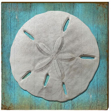 Sand Dollar Wood Wall Art 30x30 | Mill Wood Art |  SHE3-30x30