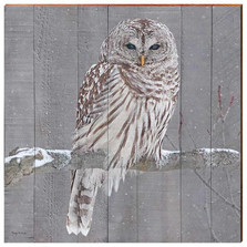 Barred Owl Wood Wall Art 30x30 |  Mill Wood Art | KOWL2-30x30